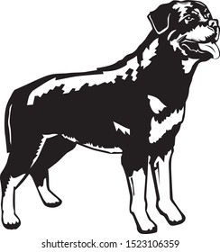 black and white illustration of a standing rottweiler
