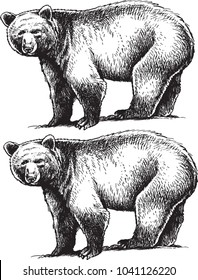 black and white isolated vector bears