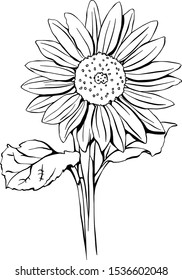 Black and White Line Drawing of a Sunflower With Transparent Background