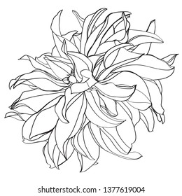 black and white line illustration of dahlia flowers on a white background