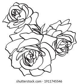 Black and white line illustration of rose flowers on a white background