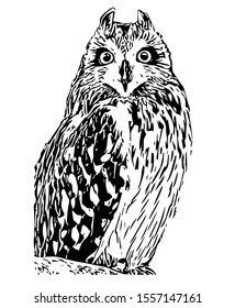 Black and white owl isolated on white background. Vector illustration.