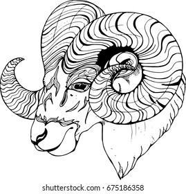 Black and white picture of a ram. Sheep in profile with expressive site.