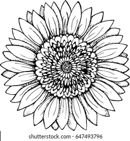 Black and white picture of a sunflower. Flower illustration