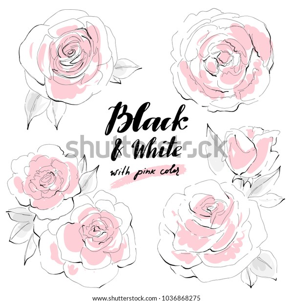 Black White Pink Abstract Rose Flowers Stock Vector Royalty