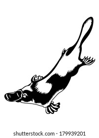 Black and White Platypus Swimming Isolated Vector