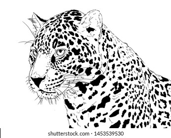 Jaguar Images, Stock Photos & Vectors | Shutterstock