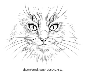 Black and white realistic long hair cat face illustration.