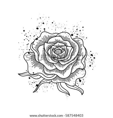 Black White Rose Flower Isolated Paint Stockvector Rechtenvrij