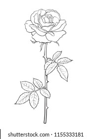 Black and white rose flower with leaves and stem.  Decorative element for tattoo, greeting card, wedding invitation. Hand drawn sketch style vector illustration.