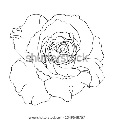 Black White Rose Flower Realistic Vector Stock Vector Royalty Free
