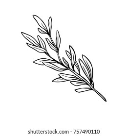 Black and white rosemary icon for olive oil. Hand drawn icon