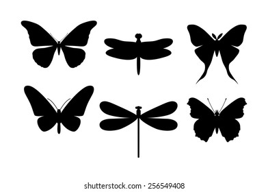 Black and white set butterflies and dragonflies � illustration