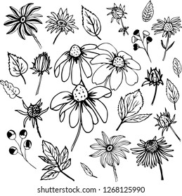 Black and white set with floral elements rudbeckias, leafs, flowers