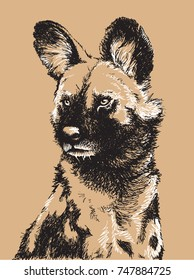 Black and white sketch of an African Wild Dog's head. Vector illustration.