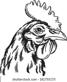 Black and white sketch of a chicken's face. Vector portrait.