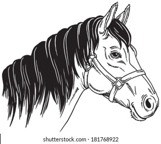 Black and white sketch of a horse's face. Vector portrait.