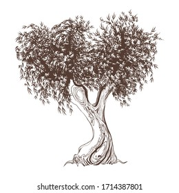 Black and white sketch of an olive tree. Vector graphics of an old tree isolated on a white background.