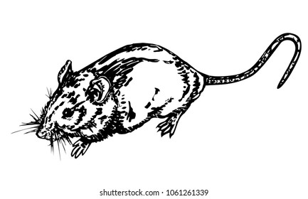 Black and white sketch of rat. Vector illustration of pretty small rodent