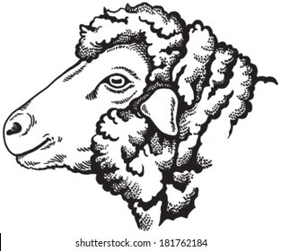 Black and white sketch of a sheep's face. Vector portrait.