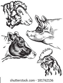 Black and white sketches of four farm animal's faces: sheep, chicken, pig and cow. Vector portraits.