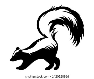 black and white skunk stands with his bushy tail