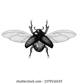 Black and white vector abstract beetle hand-drawn in the style of vintage etchings.  Good for wrapping paper, textile, bag print, t shirt etc. Vector illustration