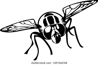 Black and white vector graphic of head-on hoverfly