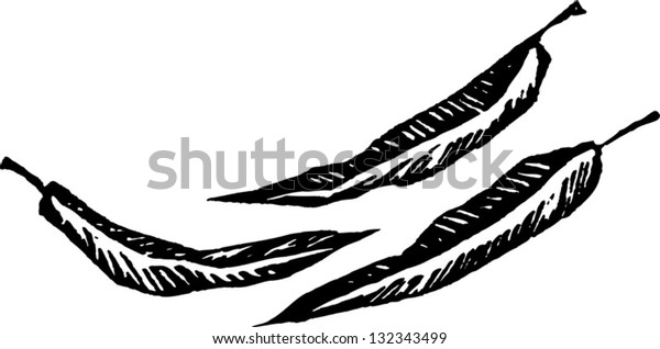 Black and white vector illustration of gum tree leaves
