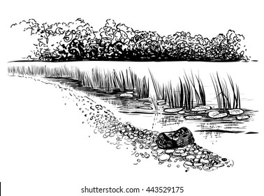 Black and white vector illustration of river landscape. Bank of the river with reed and waterlily. Sketchy style.