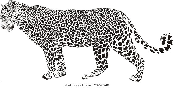 black and white vector illustration stationary leopard