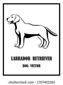Black and white vector of Labrador Retriever dog. It is standing.