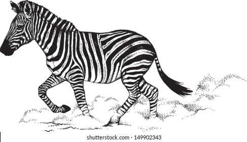 Black and white vector line drawing of a running Zebra.