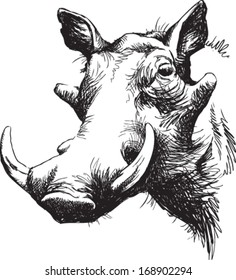 Black and white vector line drawing of a Warthog's face