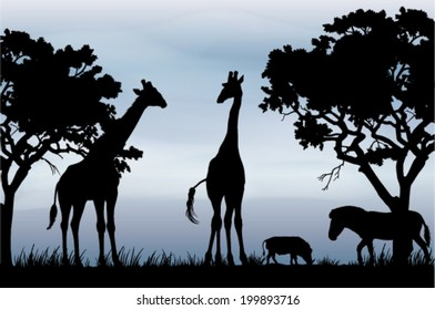 Black and white vector silhouettes of beautiful African scenery with giraffes