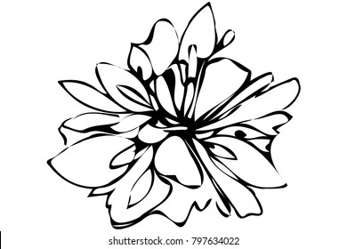 black and white vector sketch abstract flower