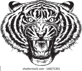 Black and white vector sketch of an angry tiger roaring