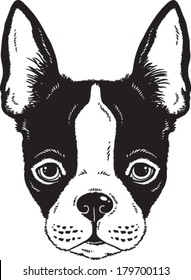Black and white vector sketch of a Boston Terrier dog's face
