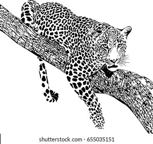 Black and white vector sketch of Jaguar lying on a tree branch