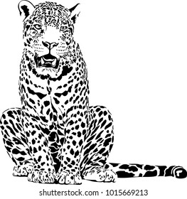Black and white vector sketch of leopard