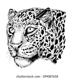 Black and white vector sketch of a leopard's muzzle. Hand drawn leopard.