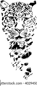 Black and white vector sketch of leopard's muzzle