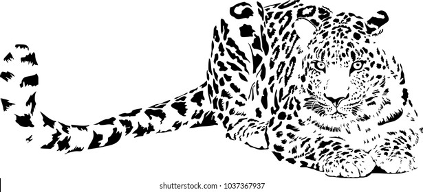 Black and white vector sketch of lying Jaguar
