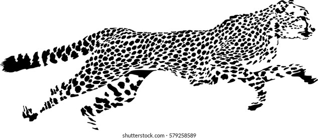 Black and white vector sketch of running Cheetah (Acinonyx jubatus)