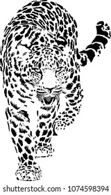 Black and white vector sketch of walks leopard