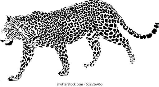 Black and white vector sketch of walks Jaguar