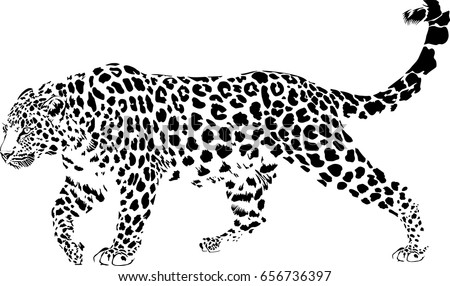 black white vector sketch walks leopard stock vector