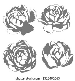 Black and white vector stamp silhouette sketch illustration, flowers of peony. Floral element for wedding and invitation cards.