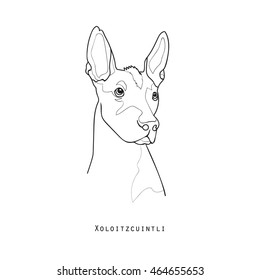 Black and white vintage illustration head portrait of one dog of Xoloitzcuintli mexican hairless breed of standard size on white background with text below