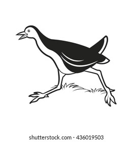 black & white water hen running near-vector drawing